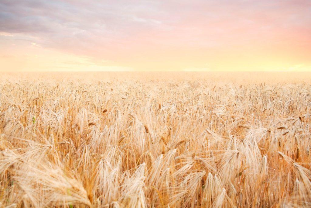 Kansas, wheat field, sunrise, Lawrence, graveyard, pastoral, reflection